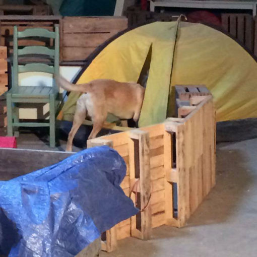 Vi2 Hundcenter - Inomhussök